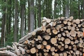 Milyen módon keletkezik a biomassza?