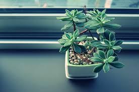 Miért előnyös a zöld iroda?