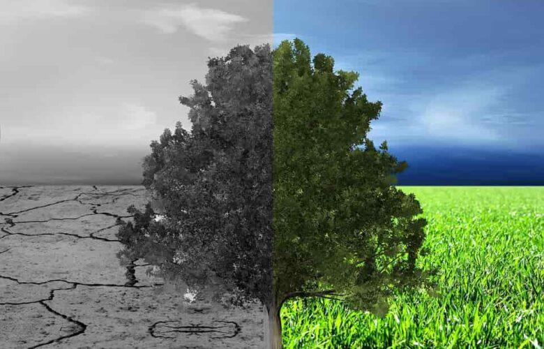 Egyedi lehetőségeket rejt magában a környezetgazdálkodás